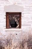 Fenster-Rahmen und heftige Schatten des verlassenen Gebäudes Lizenzfreies Stockbild