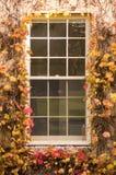 Fenster umgeben durch Efeu lizenzfreie stockfotografie