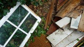 Fenster und Abfall Stockbild