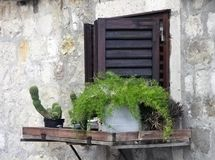 Fenster und Anlage Stockfotografie