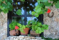 Fenster und Anlagen Stockbilder
