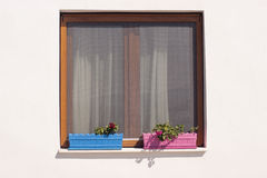 Fenster und Anlagen lizenzfreie stockfotos