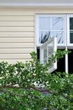 Fenster und Baumzweig Stockfoto