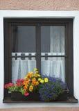 Fenster und Blume Lizenzfreie Stockbilder