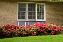 Fenster und Blumen Lizenzfreies Stockfoto