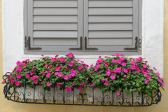 Fenster und Blumen Lizenzfreie Stockfotografie