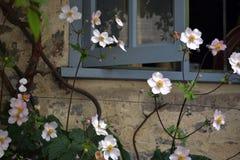 Fenster und Blumen Lizenzfreies Stockbild