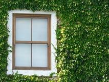 Fenster und Efeu Lizenzfreies Stockbild