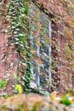 Fenster- und Farbblätter auf Wand Stockfoto