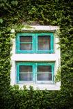 Fenster und grüner Efeu Lizenzfreies Stockbild