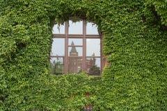 Fenster und Rebe Lizenzfreies Stockbild