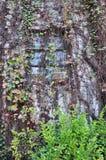Fenster unter Liana Stockbilder