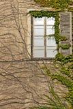 Fenster, verdreht durch einen Efeu Stockbild