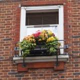 Fenster verziert mit Blumen, dekoratives Grün, typische Ansicht der London-Straße, London, Vereinigtes Königreich Lizenzfreies Stockfoto