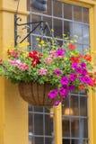 Fenster verziert mit Blumen, dekoratives Grün, typische Ansicht der London-Straße, London, Vereinigtes Königreich Lizenzfreies Stockbild