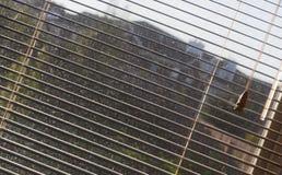 Fenster-Vorhänge Stockfoto