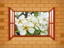 Fensterabbildung mit Birne Stockfoto