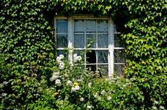 Fensterabdeckung mit grünem Efeu Stockfotos