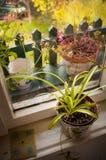 Fensteransicht, Blumentopf Lizenzfreie Stockfotografie