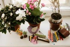 Fensterbrett mit schönen unterschiedlichen Zimmerpflanzen und Kanzleramt Stockfotografie