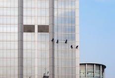 Fensterreinigungsmittel, die Wolkenkratzer säubern Stockbilder