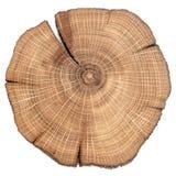 Fente criquée de chêne Image libre de droits