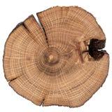Fente criquée de chêne d'isolement Image libre de droits