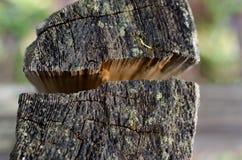 Fente dans le poteau en bois Images stock