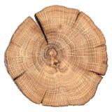 Fente fendue par chêne avec des anneaux de croissance d'isolement Images stock