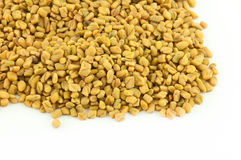 Fenugreek Royalty Free Stock Images
