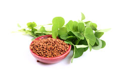 Fenugreek Royalty Free Stock Photo