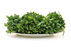 Fenugreek Stock Image