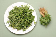 Fenugreek leaves Stock Photo