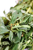 Fenugreek leaves Royalty Free Stock Image