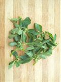 Fenugreek leaves triangle on wooden background Stock Image