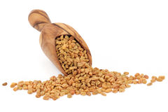 Fenugreek Seed Stock Photos