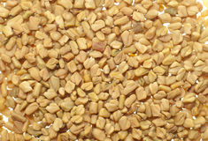 Fenugreek seed Stock Images