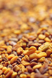 Fenugreek seeds. Fenugreek (Trigonella foenum-graecum) seeds close up. Shallow depth of field Royalty Free Stock Images