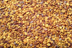 Fenugreek seeds Stock Images