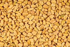 Fenugreek seeds Stock Images
