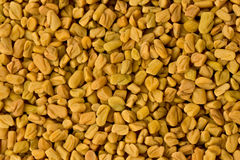 Fenugreek Seeds (Trigonella foenum-graecum) Stock Images
