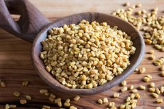 Fenugreek seeds on a wooden spoon.  royalty free stock image