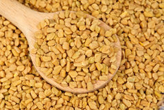 Fenugreek seeds in wooden spoon Royalty Free Stock Image