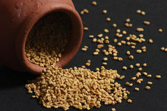 Fenugreek is used both as an herb and as a spice. Fenugreek seeds or Fenugreek is Kasuri Methiis frequently used in the preparation of pickles, curry powders Stock Photos