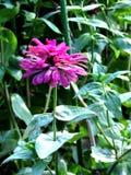 Fenway Victory Garden Flower stock photo