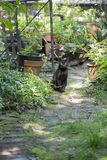 Feral Black Cat dans le jardin Photos libres de droits