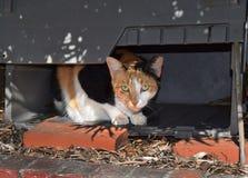 Feral Calico Cat in einem Kasten für Schutz Lizenzfreies Stockfoto