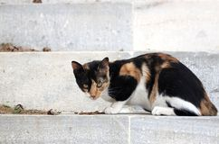 Feral greek cat. Feral calico cat in greek island of Paros stock photos