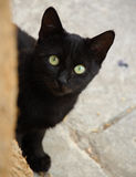 Feral Cat. Feral Black Cat kitten peers around a tree in Napflio, Greece Royalty Free Stock Photo