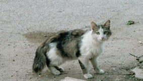 Feral cat hiding. Shy pussycat stock video footage